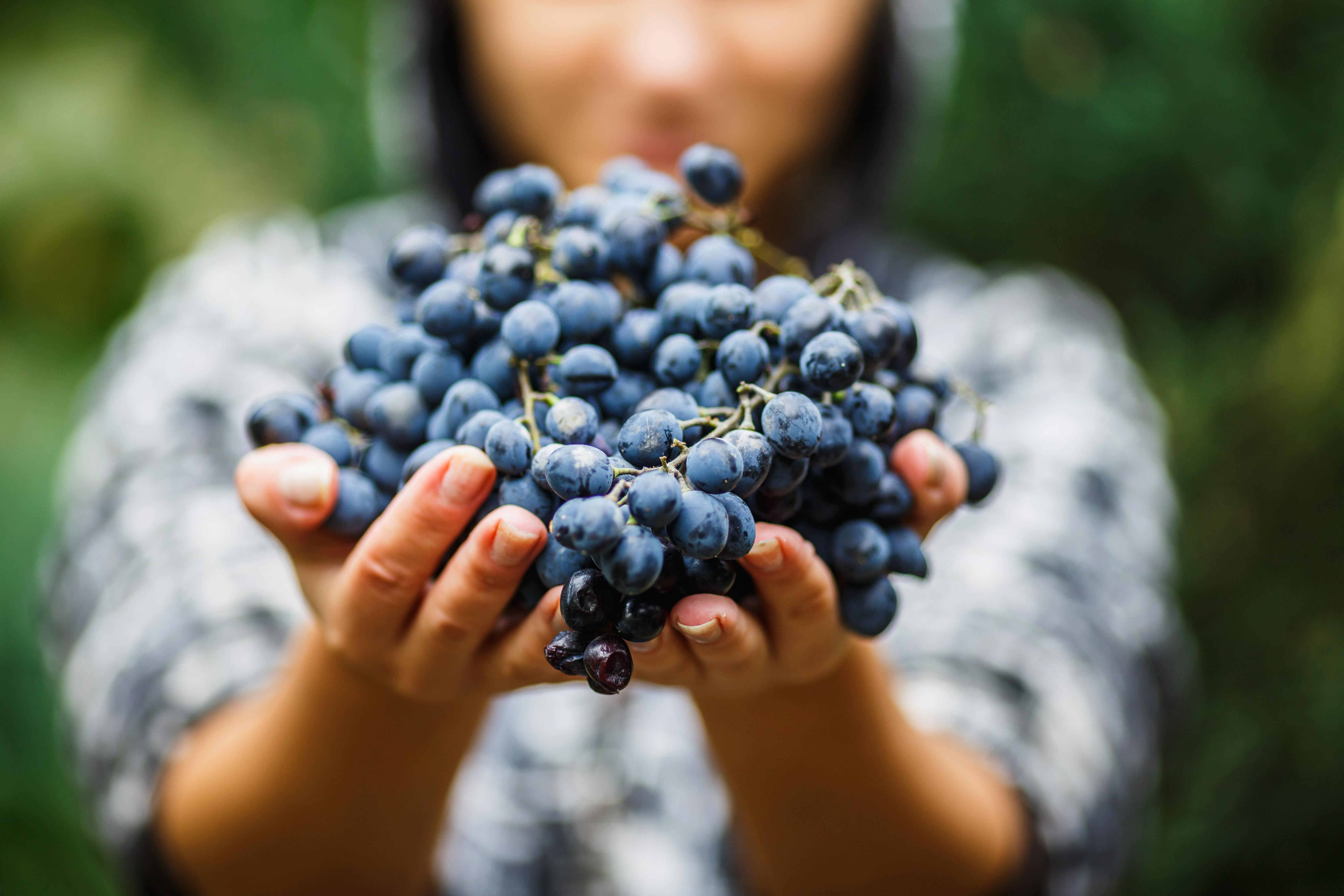 Традиционное или Экологически рациональное виноградарство?